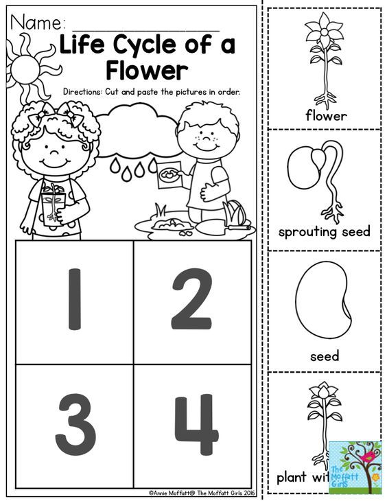 Life Cycle Of A Plant For Preschool