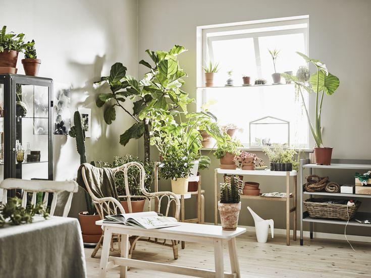25 beste ideen over Bamboe planten op Pinterest  Bamboe