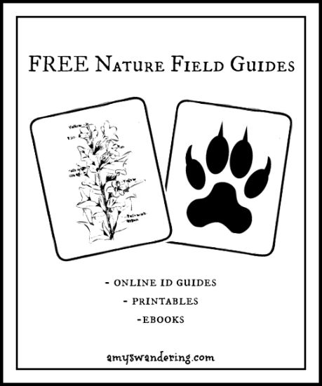 Free Nature Field Guides online guides, printables
