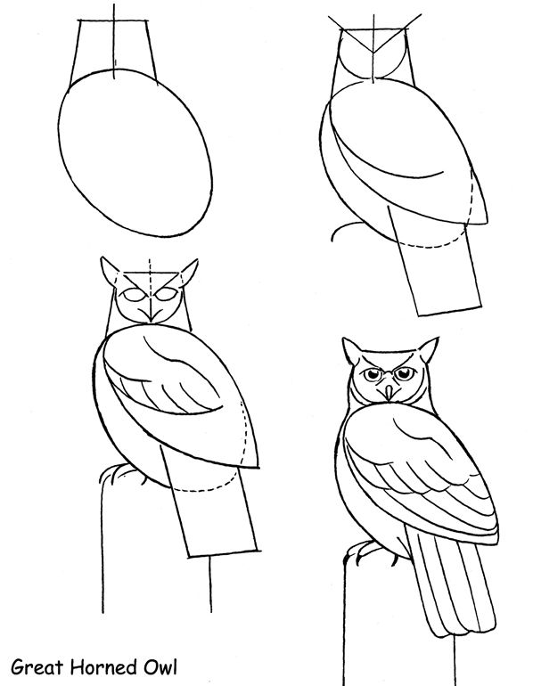 38 best images about How to draw an owl on Pinterest