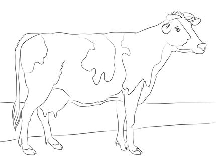 Click to see printable version of Holstein Cow coloring