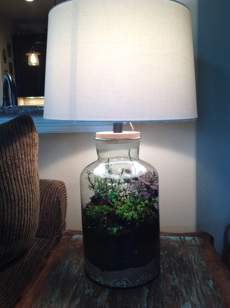 Fillable lamp terrarium Love it Just finished making two  Projects  Pinterest
