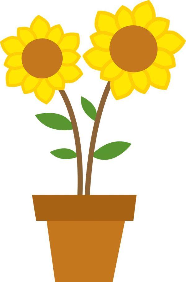 1000 sunflower clip