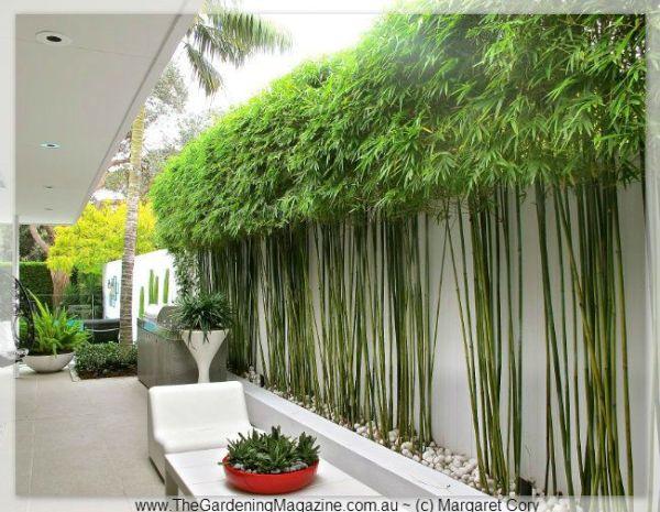 ideas bamboo garden
