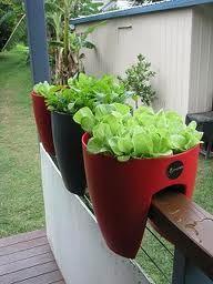 18 Best Images About Balcony Garden Ideas On Pinterest Window