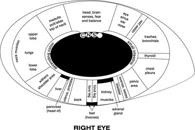 17 Best images about I See You (Iridology) on Pinterest