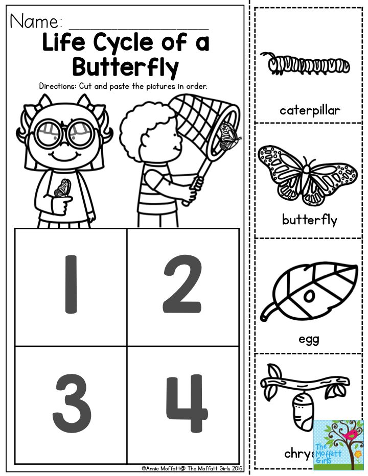 25+ best ideas about Lifecycle of a butterfly on Pinterest