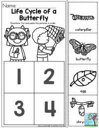 Moth Life Cycle Worksheet