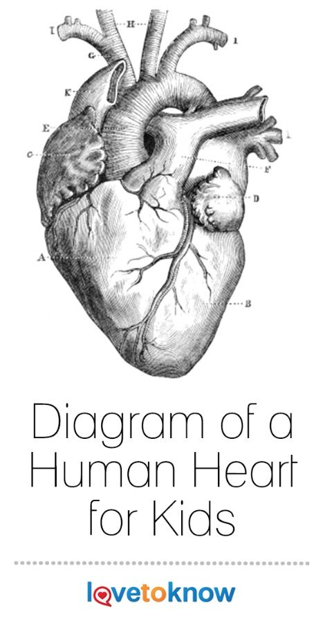 25+ best ideas about Diagram Of The Heart on Pinterest