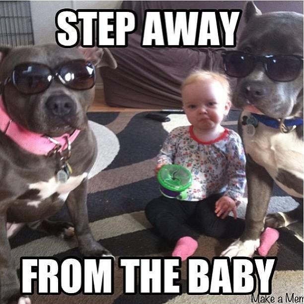 91b525e8d43f3eb58bac036f0acd062e Pitbull Dog Character