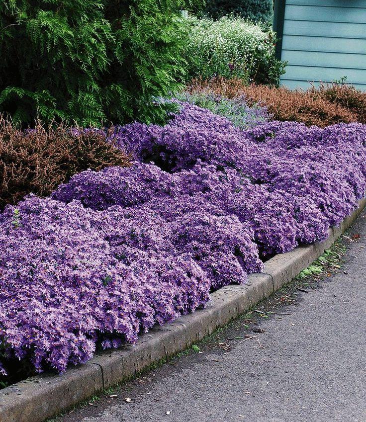Welche Blumen Blhen Den Ganzen Sommer Im Garten garten