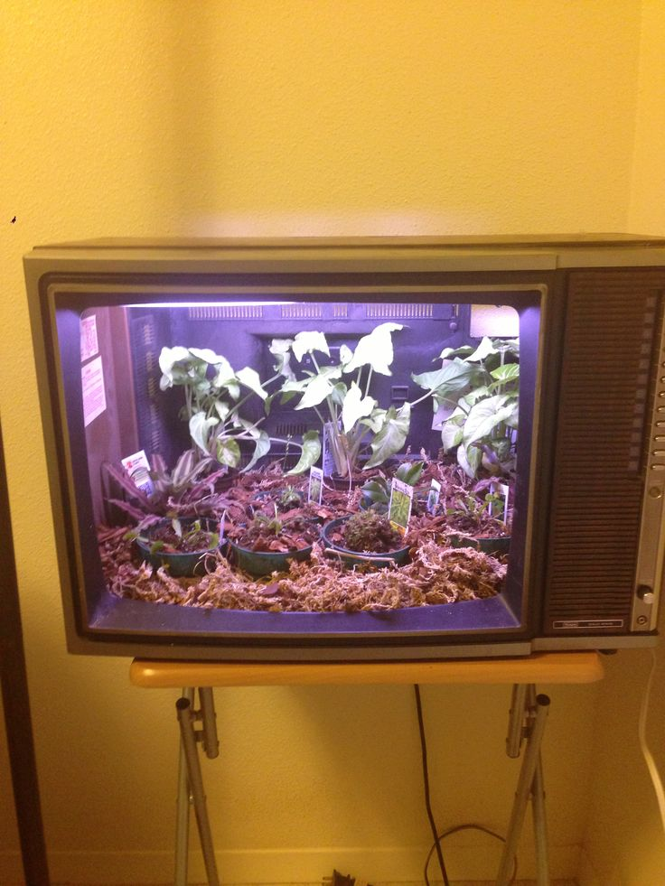 tv terrarium progress aesthetics of design rh aesdes org