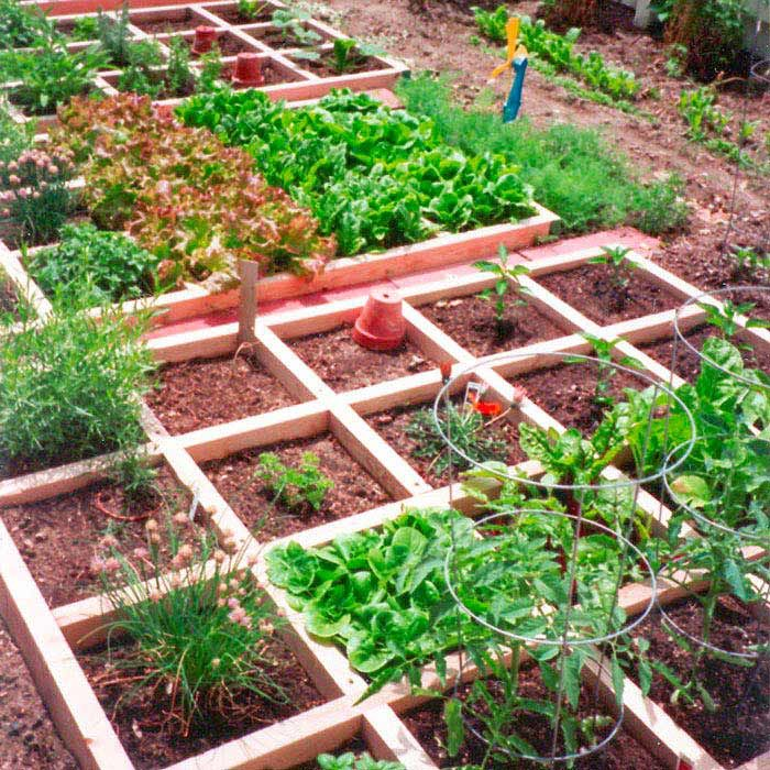 25 Best Ideas About How To Plan A Vegetable Garden On Pinterest