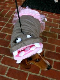 17 Best images about dog costume on Pinterest | Where's ...