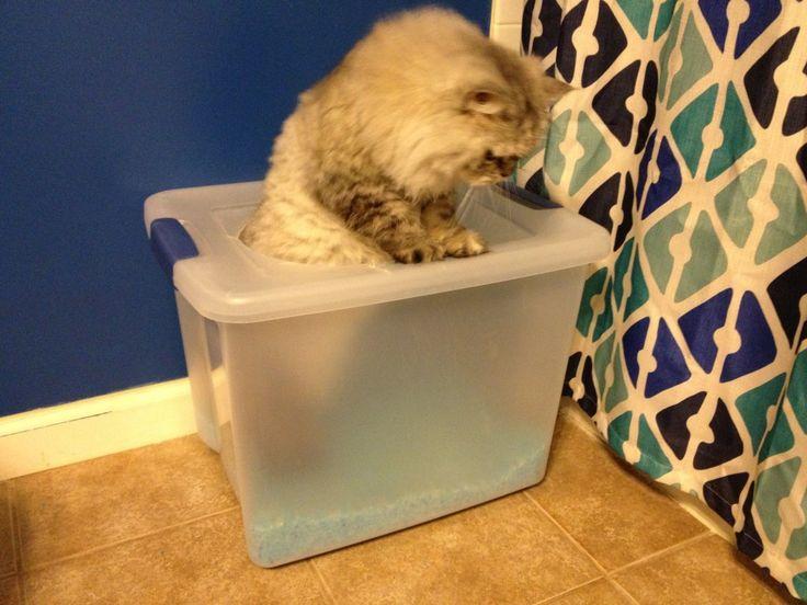 A proper pooper cat litter boxes storage bins and tops