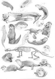 1613 best images about Absolutely Love Otters on Pinterest