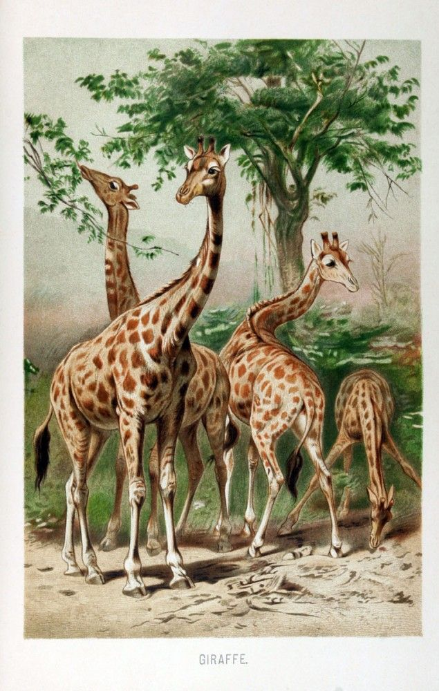 21 Best Images About Giraffe Birthday Cards On Pinterest 8th Birthday Giraffe Birthday