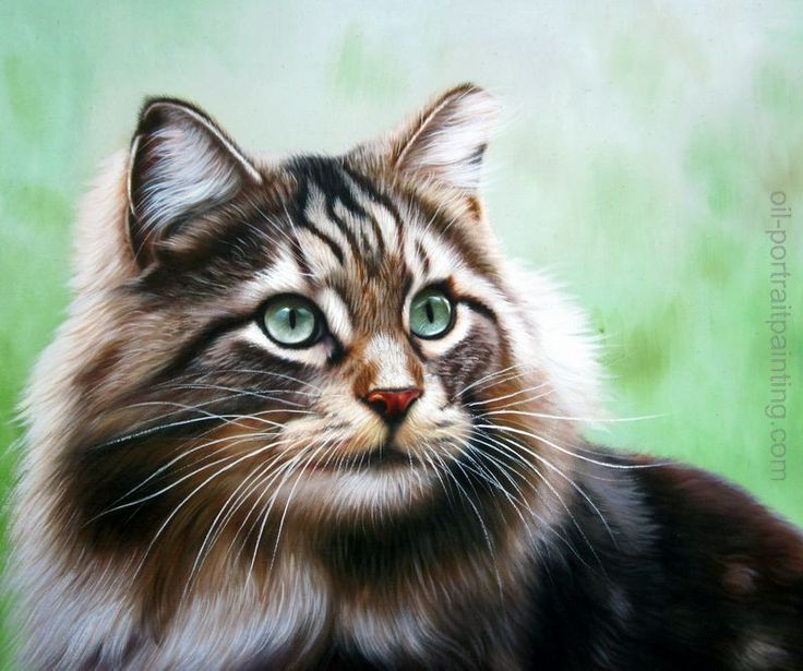 Paintings of Maine Coon cats by rozartcrafts  171 Art