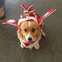 65 best images about Corgis in Costumes! on Pinterest ...