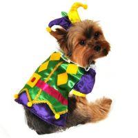 Mardi Gras Harlequin Dog Costume | Dog costumes, Halloween ...