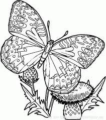 25+ best ideas about Coloriage Papillon on Pinterest