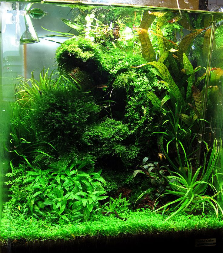 17+ Best Images About Aquascape Layout Inspiration On