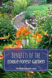 1000+ images about Best of Tenth Acre Farm on Pinterest ...