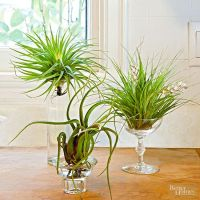 25+ best ideas about Air Plant Display on Pinterest