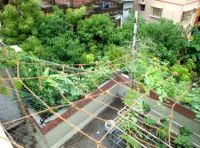 16 best images about Rooftop Garden India on Pinterest ...