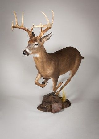 321 best images about Huntress Heaven  Taxidermy  Trophy