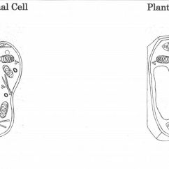 Plant Animal Cell Venn Diagram 1989 Jeep Wrangler Wiring And Foldable Template.pdf | Classroom Pinterest D, Plants