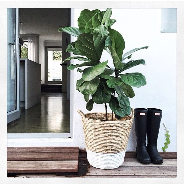 Dipped planter basket styled by Mon Palmer  Kmart