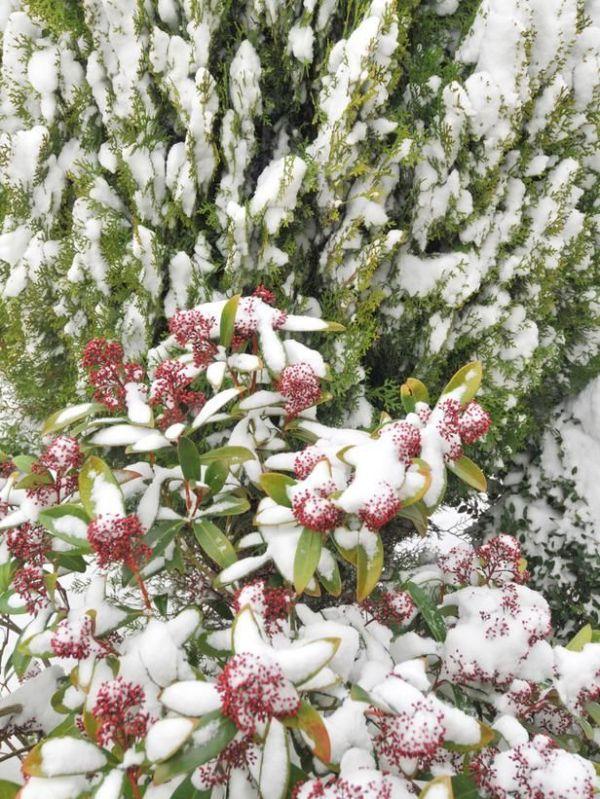 winter shrubs & bushes