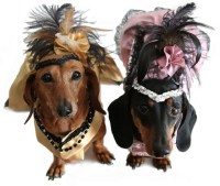 Doxies in Costume | Wild about Weiners | Pinterest | Dog ...