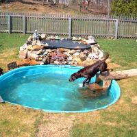 Best 20+ Dog swimming pools ideas on Pinterest | Diy dog ...