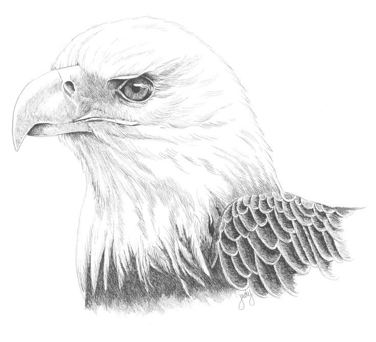 Informal Eagle Engineering Drawing Book and eagle draw via