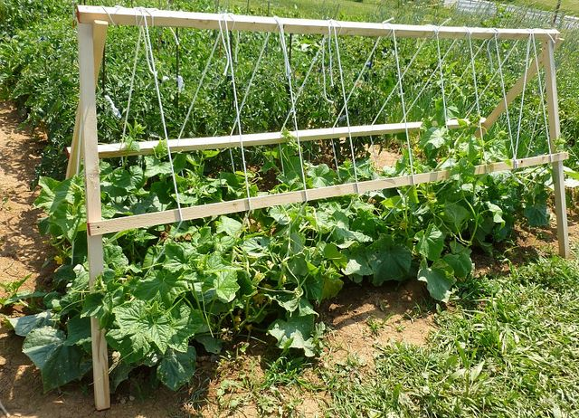 The 33 Best Images About Community Garden On Pinterest Gardens