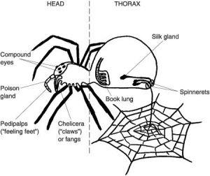Spider diagram | HolidayHalloween | Pinterest | Spider