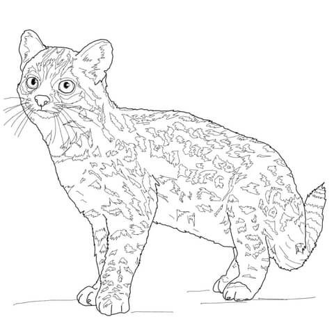 1000+ images about Just cats coloring 1 on Pinterest