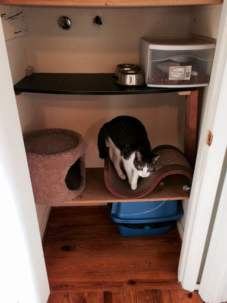 55 Best Images About Cat Closet On Pinterest Custom Dog