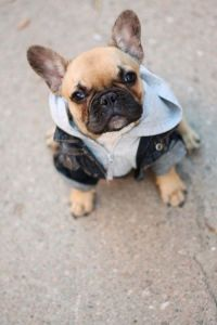 17 Best images about Dog costumes on Pinterest   Gladiator ...
