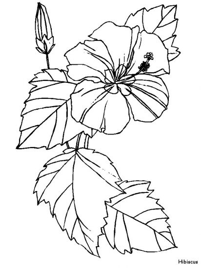 17 Best ideas about Hibiscus Drawing on Pinterest