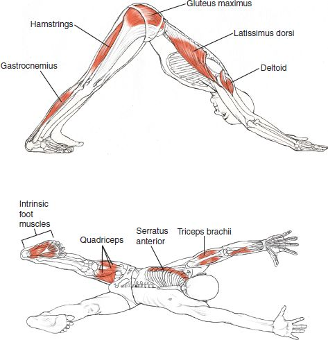 17 Best images about Self defense and human anatomy on