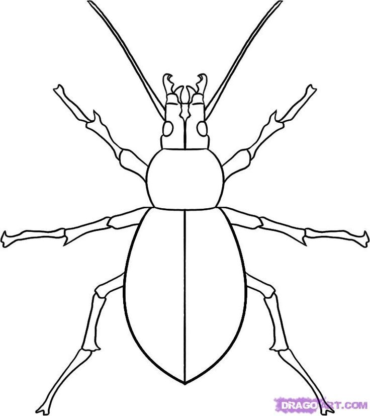 http://imgs.steps.dragoart.com/how-to-draw-a-beetle-step-7