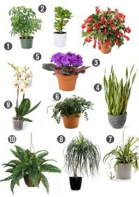 1000+ images about Non Toxic House Plants-Children, Dogs ...
