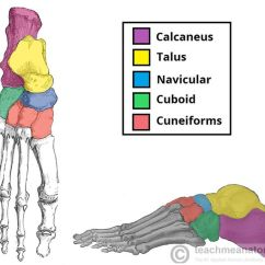 Human Foot Skeleton Diagram Labeled Wiring For Old Bt Master Socket Fig 1.1 - The Tarsal Bones Of Foot. Go To Http://m.dummies.com/how-to/content/ten-helpful ...