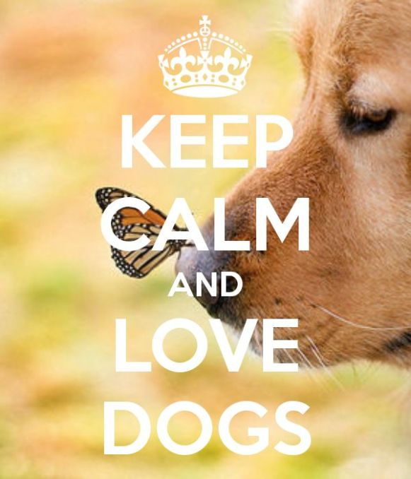 Image result for keep calm and love your dog