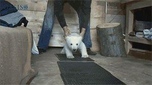 Baby polar bear fluffy.   31 Best Kinds Of Fluffy