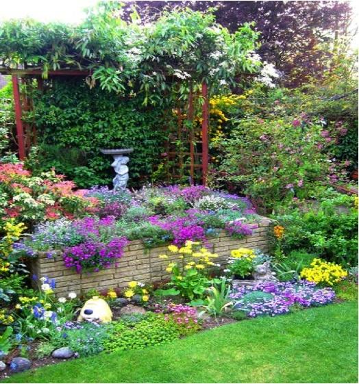 colorful garden flower