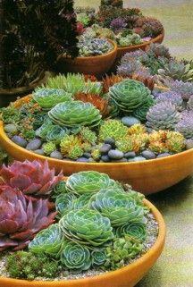 Best 25 Succulent Bowls Ideas On Pinterest Bird Bath Garden